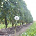 Coltivazione sostenibile